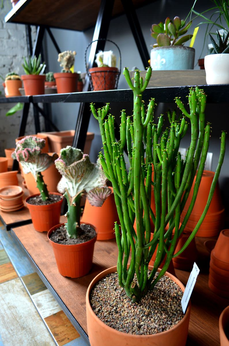 cactusby (11)