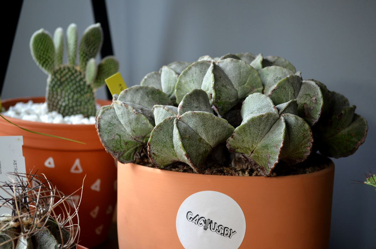 cactusby (13)