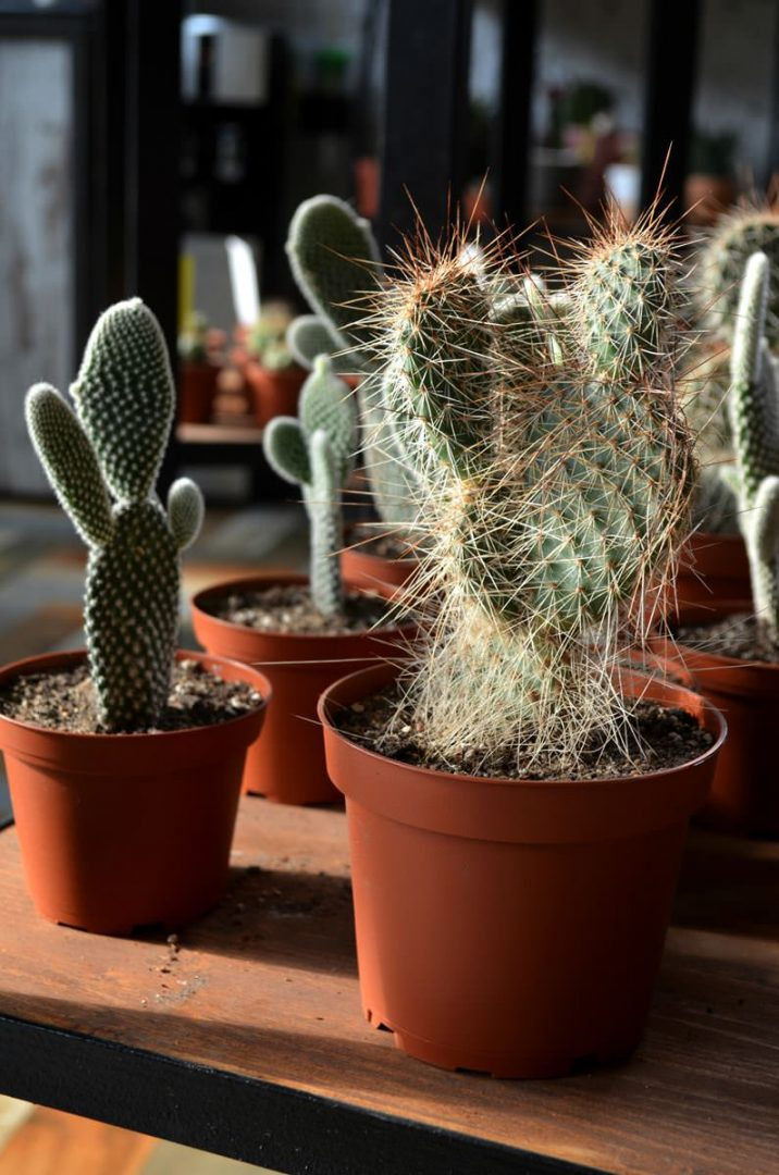 cactusby (17)