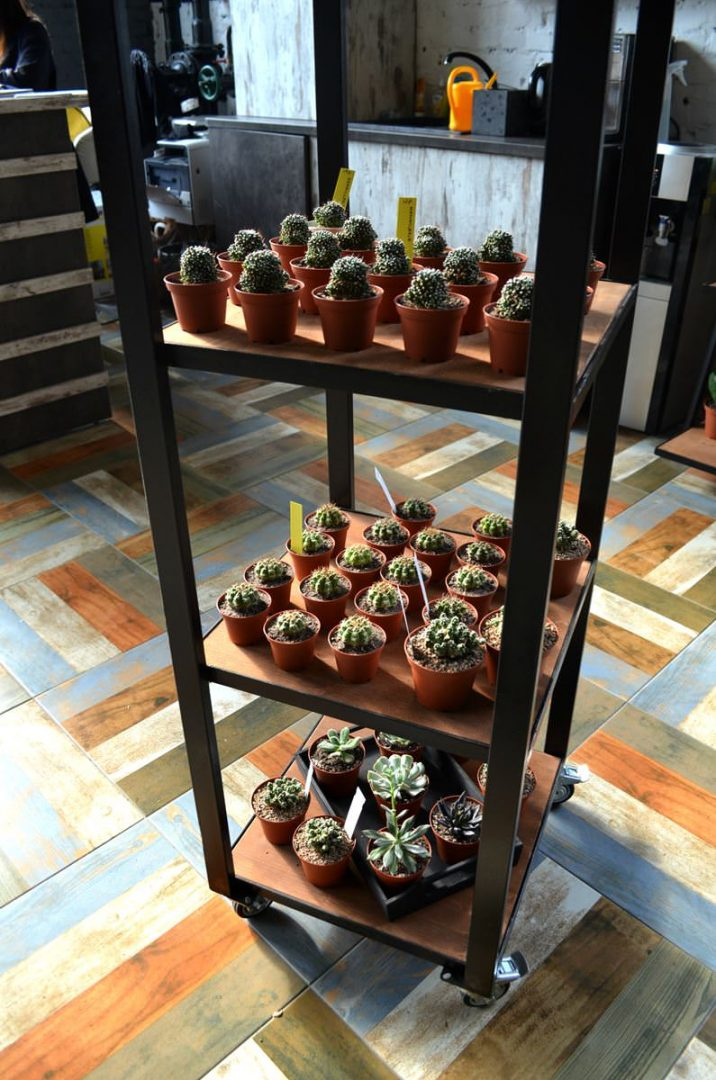 cactusby (19)