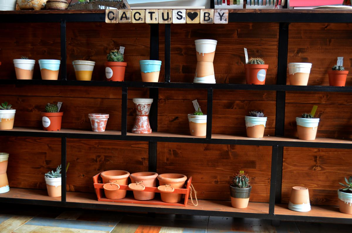 cactusby (4)